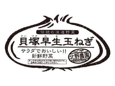 画像1: 【ご予約商品5/10頃発送】貝塚早生玉ねぎ10kg